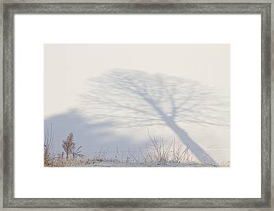 Me And My Shadow Framed Print by James BO  Insogna