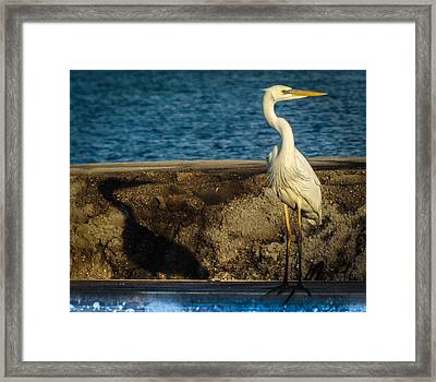 Me And My Shadow Framed Print by Karen Wiles