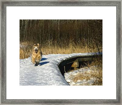 Me And My Shadows Framed Print by Rhonda McDougall