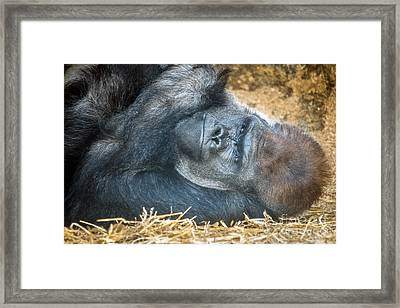 Me Sleep And You Shut Up Framed Print by Ray Warren