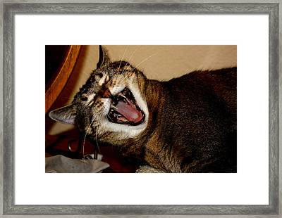 Me Wow Framed Print