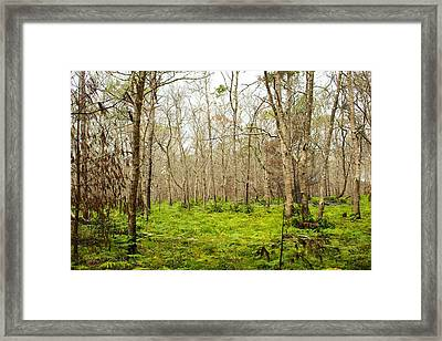 Meadow Framed Print by Allan Morrison
