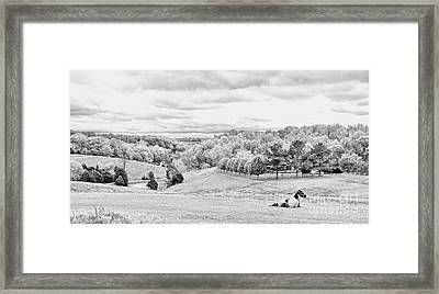 Meadow Bw Framed Print by Chuck Kuhn
