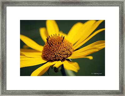 Meadow Dance Framed Print
