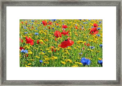 Meadow Flora Framed Print