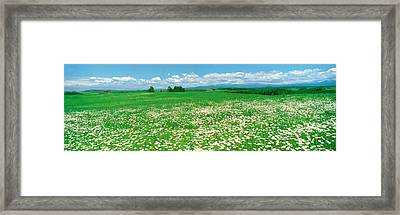 Meadow Flowers, Daisy Field Framed Print by Panoramic Images