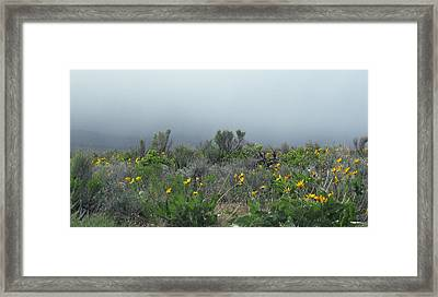 Meadow Fog Framed Print by Jennifer Muller