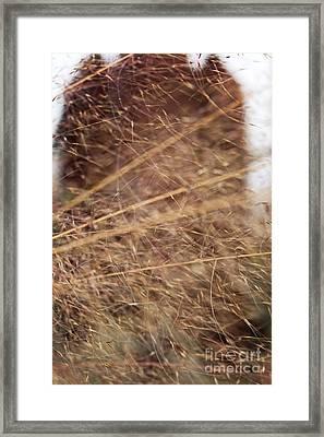 Meadow In My Dreams Framed Print by Ella Kaye Dickey