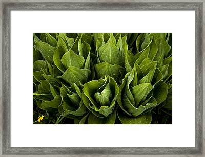 Meadow Lilies Framed Print by The Forests Edge Photography - Diane Sandoval