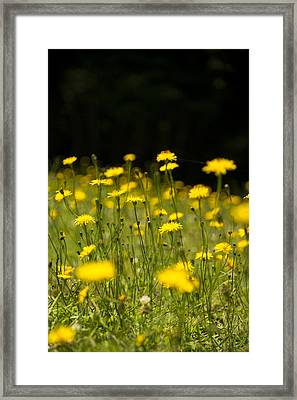 Meadow Maidens Framed Print by Aaron Bedell