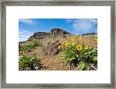 Framed Print featuring the photograph Meadow Of Arrowleaf Balsamroot by Jeff Goulden