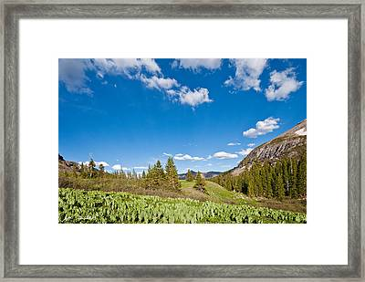 Framed Print featuring the photograph Meadow Of False Hellebore by Jeff Goulden