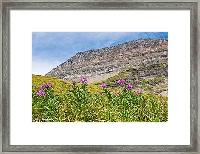 Meadow Of Fireweed Below The Continental Divide Framed Print