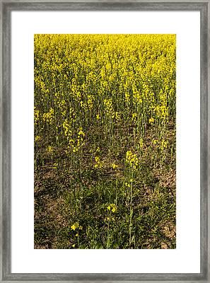Meadow Of Rapes Framed Print by Svetlana Sewell