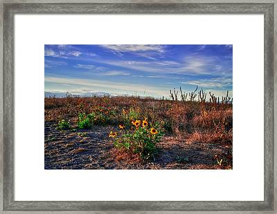 Framed Print featuring the photograph Meadow Of Wild Flowers by Eti Reid