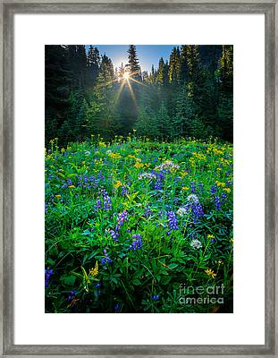 Meadow Sunburst Framed Print