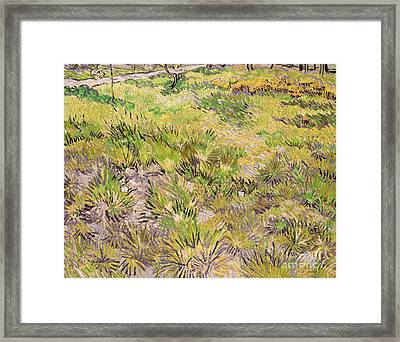 Meadow With Butterflies Framed Print by Vincent Van Gogh