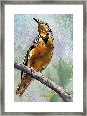 Meadowlark Framed Print by Anne Gifford