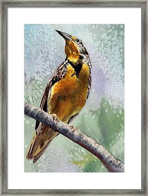 Meadowlark Framed Print