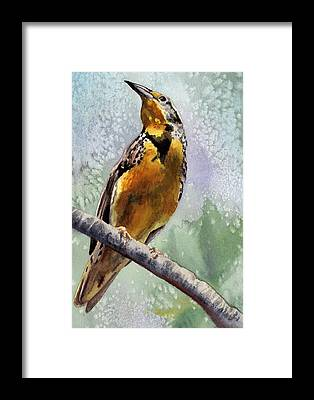 Meadowlark Framed Prints