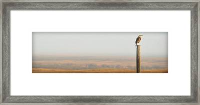 Meadowlark Mornings.. Framed Print