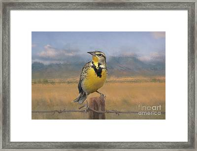 Meadowlark On The Fence 1 Framed Print