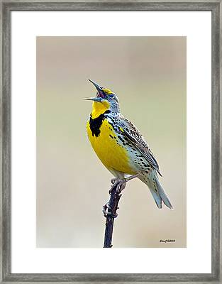 Meadowlark Singing Framed Print