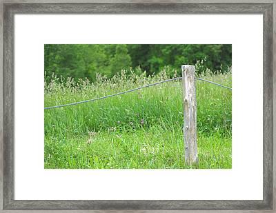 Meadow's Edge Framed Print
