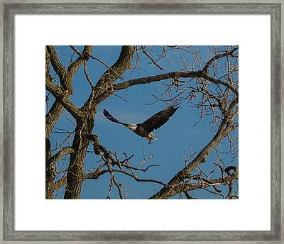 Meal In Flight Framed Print by Joe Scott