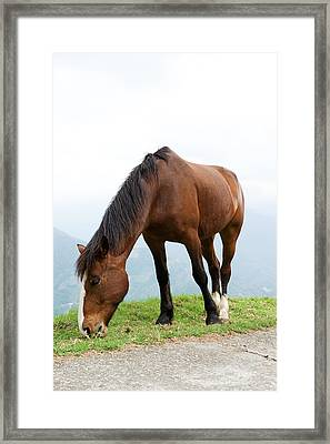 Meal Time Framed Print by Yew Kwang