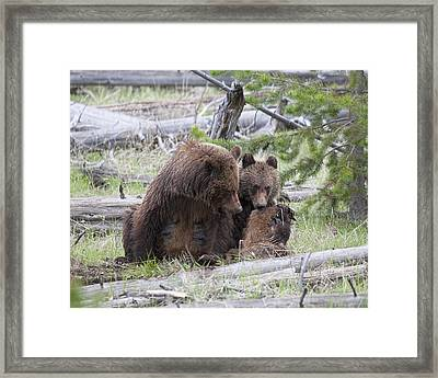 Mealtime Framed Print by Gerry Sibell