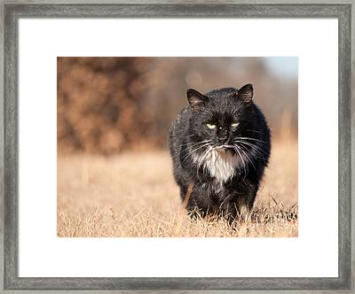 Mean Looking Softie Framed Print