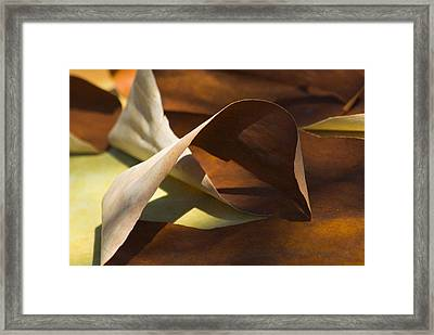 Framed Print featuring the photograph Mebius Strip by Yulia Kazansky