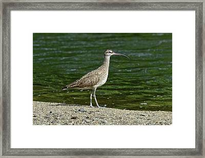 Mecana River Nature Reserve Framed Print by Kike Calvo