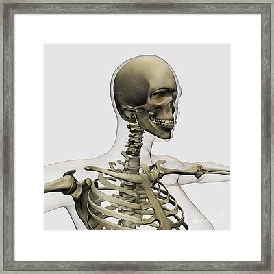 Medical Illustration Of A Womans Skull Framed Print by Stocktrek Images