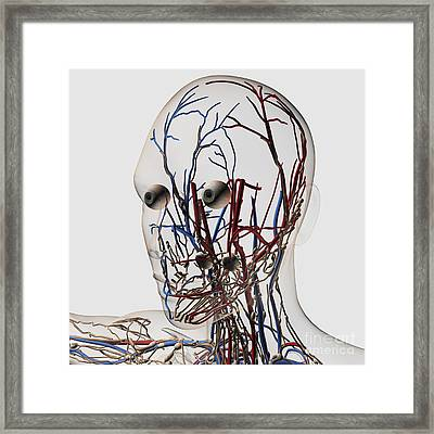 Medical Illustration Of Head Arteries Framed Print