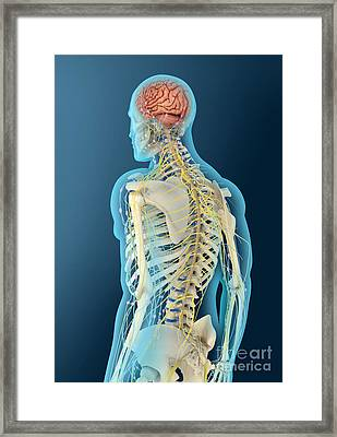 Medical Illustration Of Human Brain Framed Print by Stocktrek Images