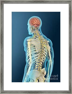 Medical Illustration Of Human Brain Framed Print