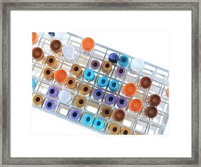 Medical Samples In A Test Tube Rack Framed Print