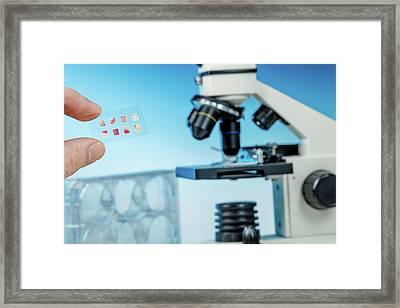 Medical Samples On Microscope Slide Framed Print by Wladimir Bulgar