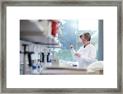 Medical Scientist At Work Framed Print by John Cairns/oxford University Images