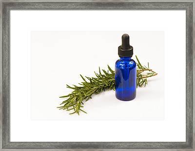 Medicinal Rosemary Framed Print
