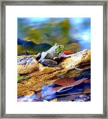 Meditation Framed Print by Deena Stoddard