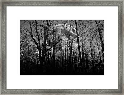 Meditative Forest Wanderer  Framed Print