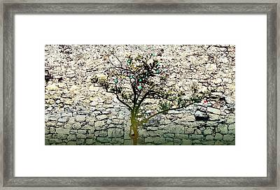 Mediterranean Garden With An Old Wall Framed Print by Arsenije Jovanovic