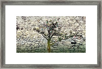 Mediterranean Garden With An Old Wall Framed Print