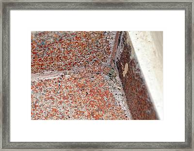 Mediterranean House Gecko On A Wall Framed Print by Bob Gibbons