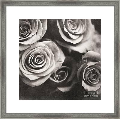 Medium Format Analog Black And White Photo Of White Rose Flowers Framed Print by Edward Olive