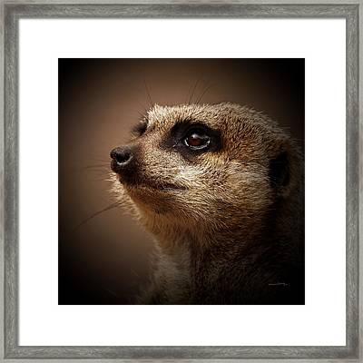 Meerkat 6 Framed Print by Ernie Echols