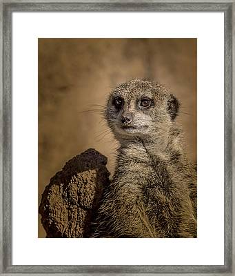 Meerkat Framed Print by Ernie Echols
